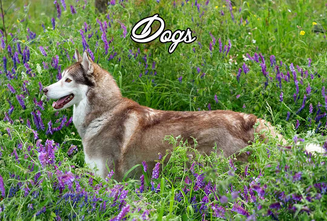 Kamloops dog photography