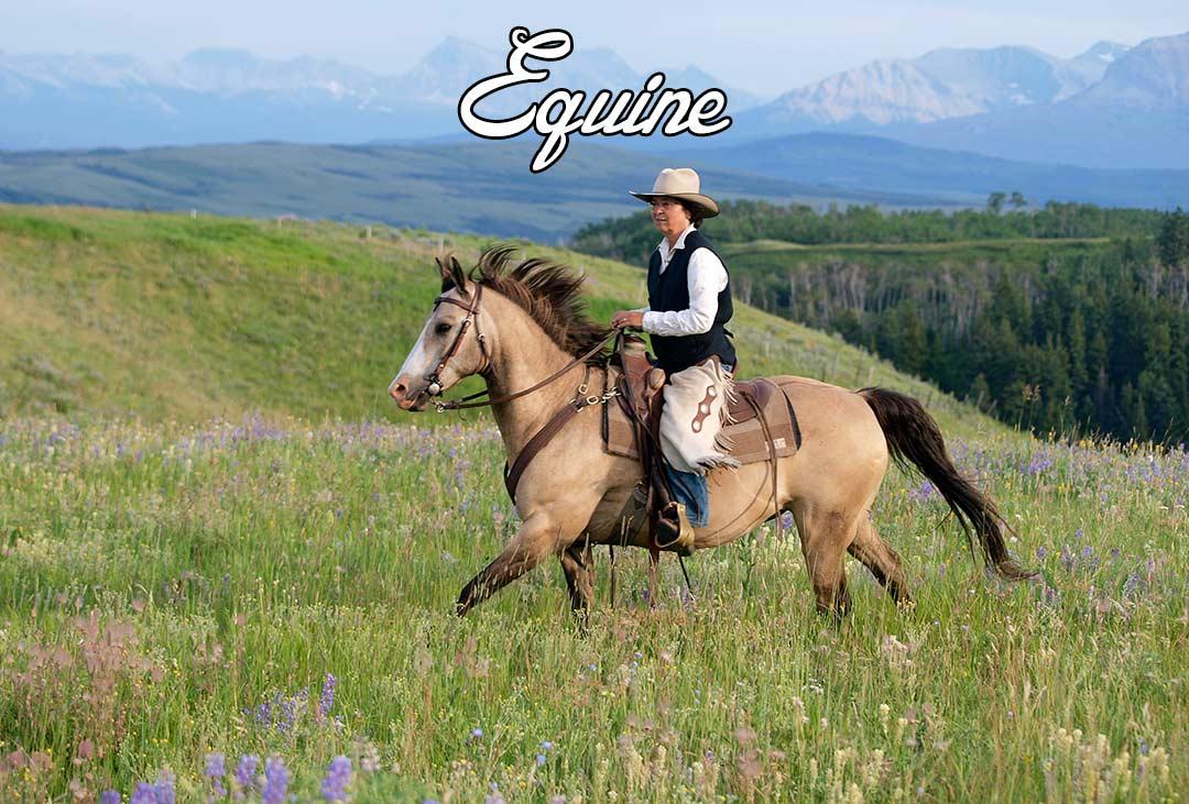 Kamloops horse photography